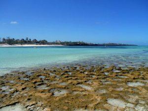 corallina